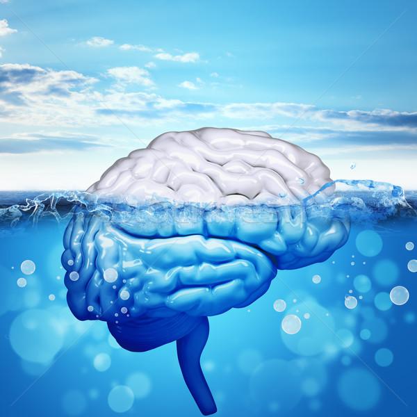 小脑 商业照片和矢量图