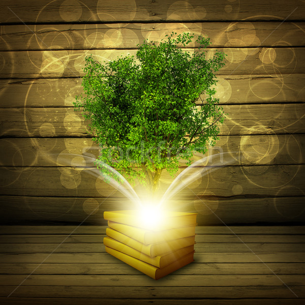 Books with magical green tree and rays of light Stock photo © cherezoff