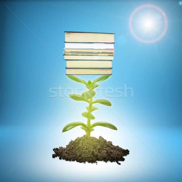 Heap of ground with plant and books Stock photo © cherezoff