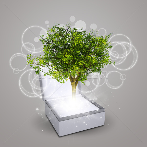 Jewelry box with magical green tree Stock photo © cherezoff