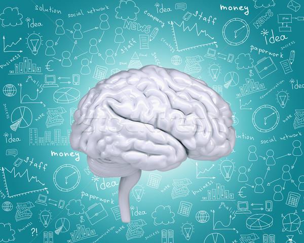 Human brain Stock photo © cherezoff