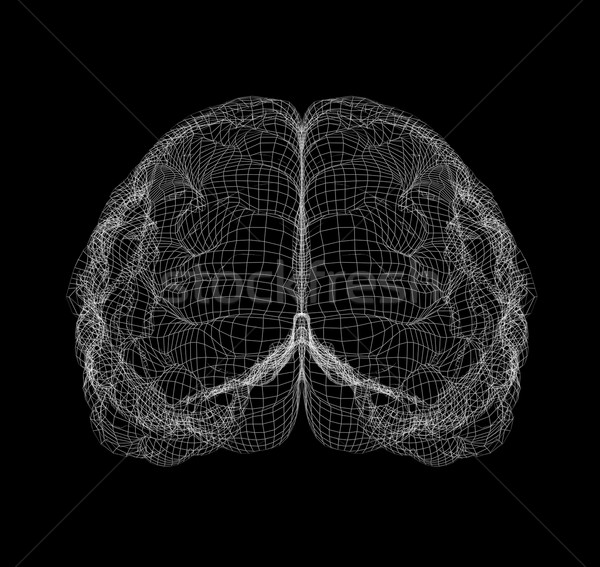 Wire-frame of brain with occipital region Stock photo © cherezoff