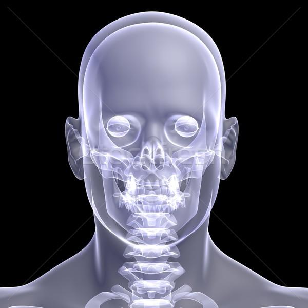 Man's head Stock photo © cherezoff