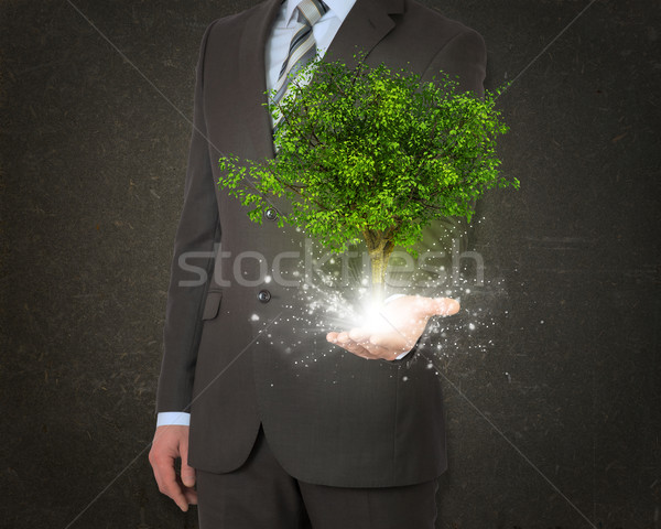 Businessmen hold magical green tree and rays of light Stock photo © cherezoff