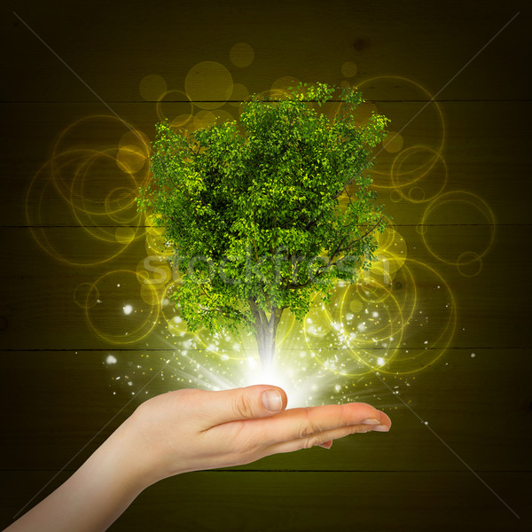 Hand hold magical green tree and rays of light Stock photo © cherezoff
