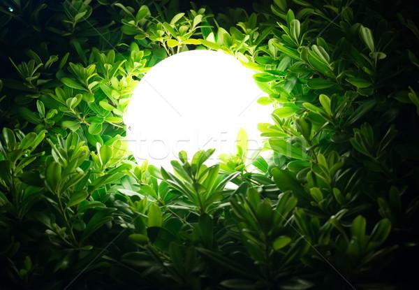 Street lamp in bush Stock photo © cherezoff