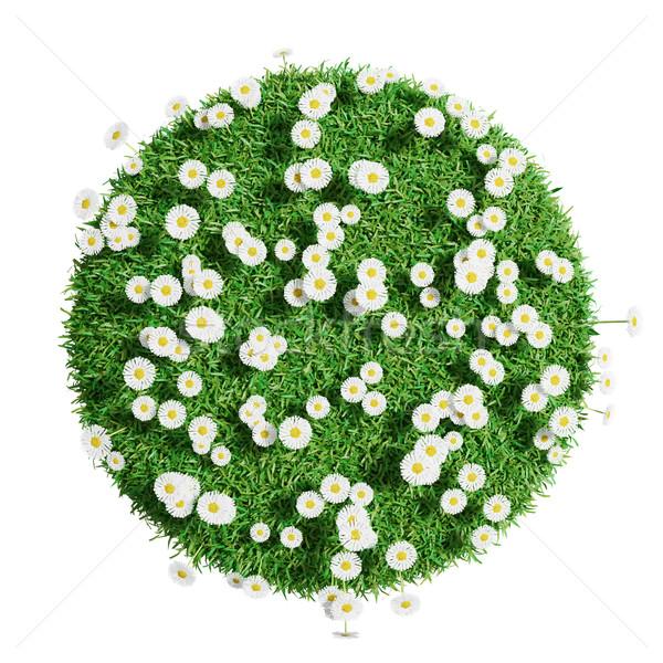 Természetes fű aréna virágok izolált fehér Stock fotó © cherezoff