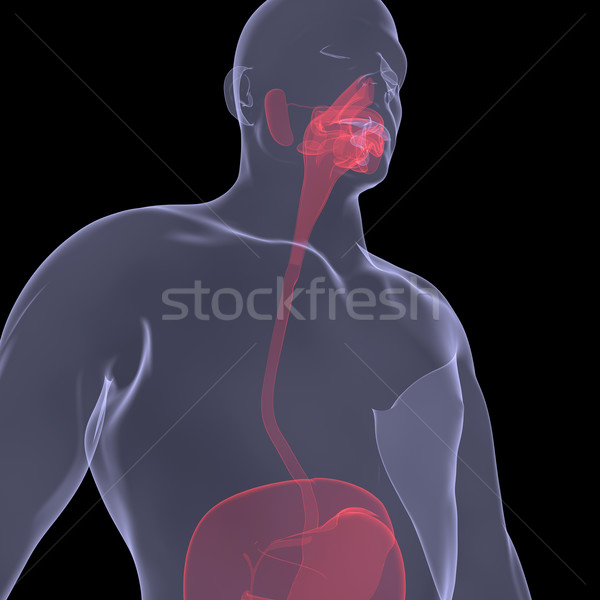 X-Ray picture of a person. Sore digestion Stock photo © cherezoff