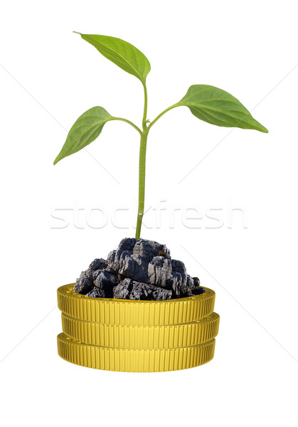 Green plant on gold coins pile Stock photo © cherezoff