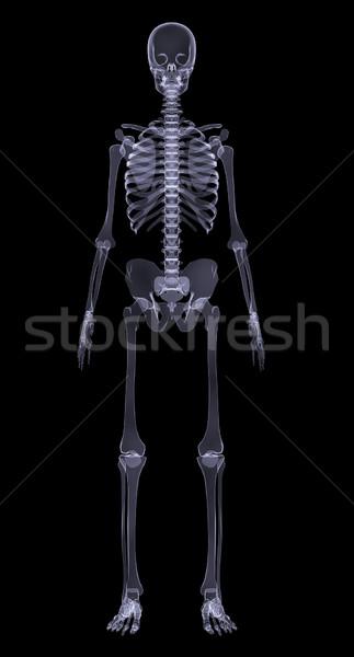 Human skeleton on black Stock photo © cherezoff