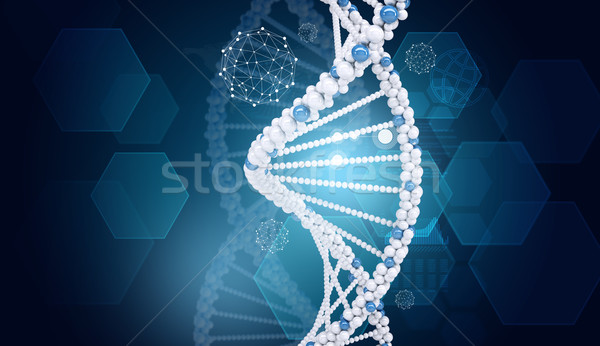 Human DNA. Background of hexagons world map, graph, wire-frame Stock photo © cherezoff
