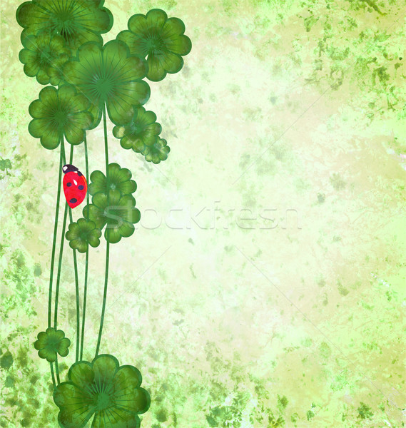 clover with ladybug on green grunge texture background St. Patri Stock photo © cherju