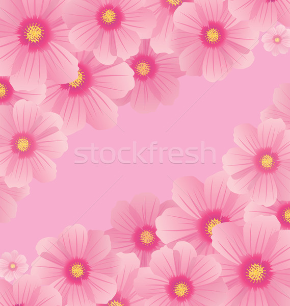 pink cosmos flowers borders and corners vector Stock photo © cherju