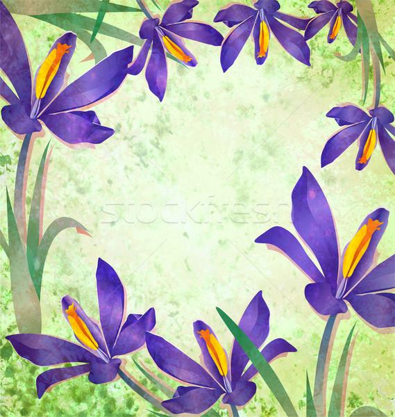 Grunge flor de primavera azafrán marco verde Pascua Foto stock © cherju