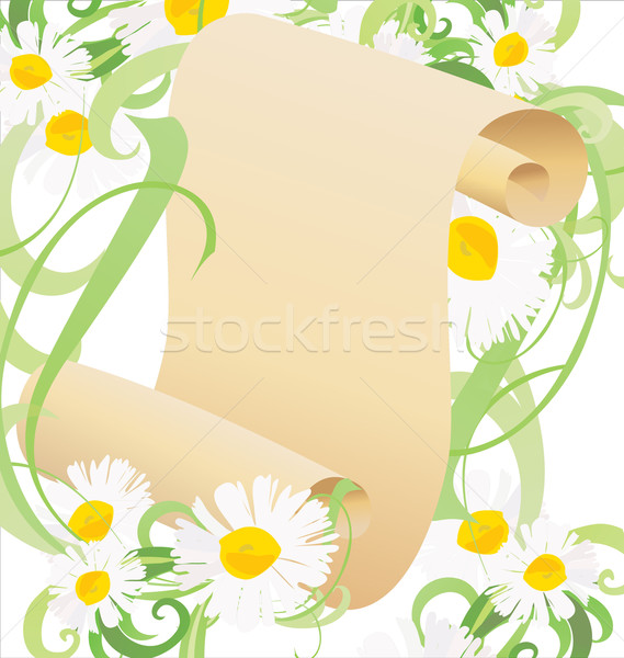 Daisy flores hierba verde papel viejo desplazamiento ilustración Foto stock © cherju