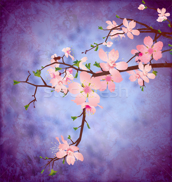 blossom cherry tree branch on grunge blue square vintage backgro Stock photo © cherju