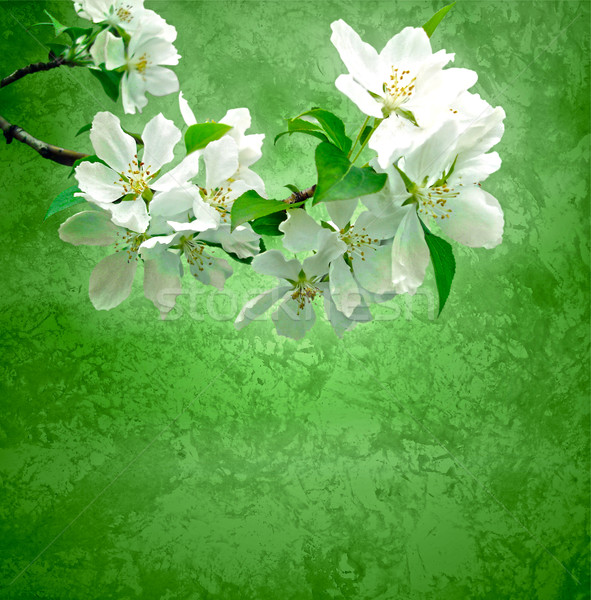 Stock photo: blossoming tree branch on green grunge background