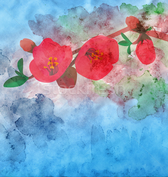 watercolor garnet flower with colorful background Stock photo © cherju