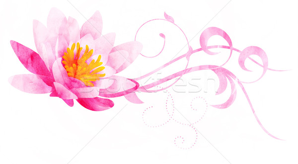 Stock photo: pink water lily watercolor illustration isolated on white
