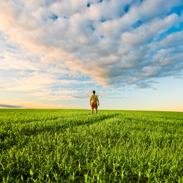 man on green field under sunset skies Stock photo © chesterf
