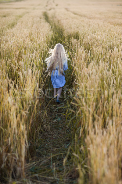 girl in wheat field Stock photo © chesterf