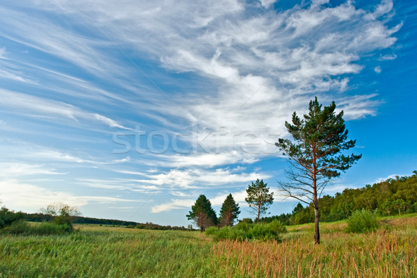 Tájkép nyár égbolt tavasz természet háttér Stock fotó © chesterf