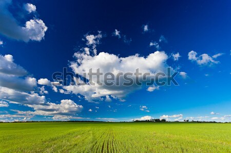 summer field Stock photo © chesterf