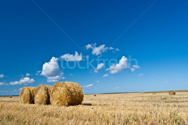 Feno campo azul céu nuvens Foto stock © chesterf