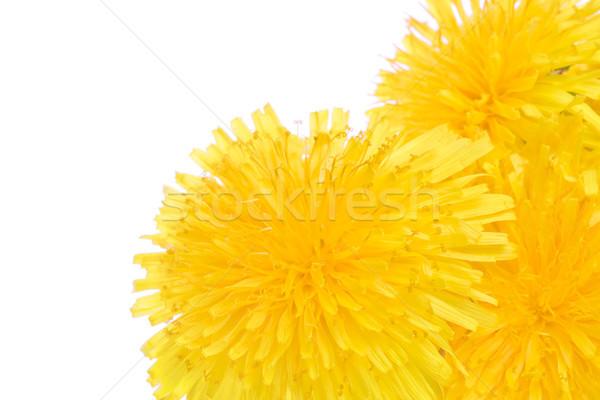 Сток-фото: дерево · одуванчик · макроса · цветы · право · стороны