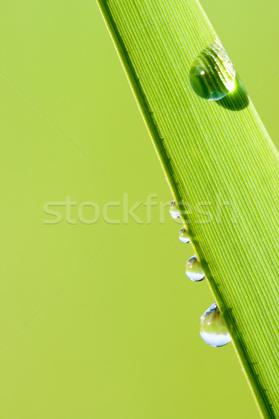 Stock photo: green natural background