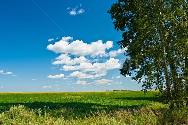 Gyönyörű nyár tájkép tavasz háttér zöld Stock fotó © chesterf
