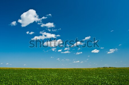 green hill under skies Stock photo © chesterf
