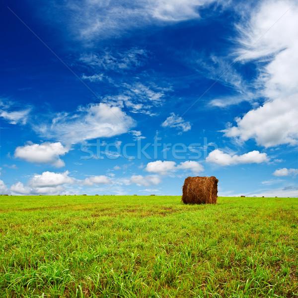 緑 フィールド 乾草 青 自然 ファーム ストックフォト © chesterf