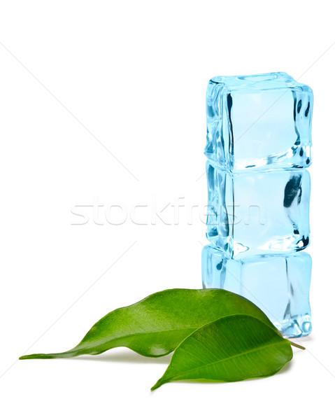 Stockfoto: Bladeren · drie · Blauw · twee · groene · bladeren