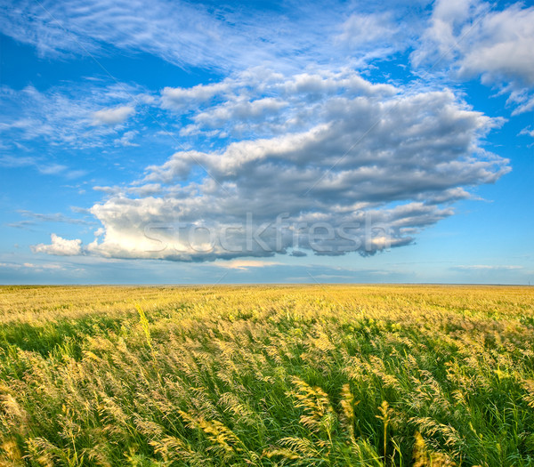 endless field under beautiful skies Stock photo © chesterf