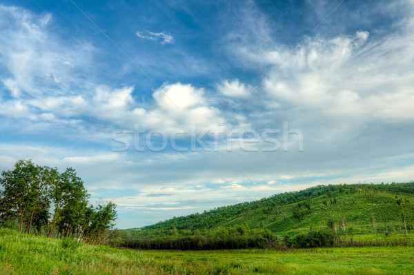wild lanscape Stock photo © chesterf