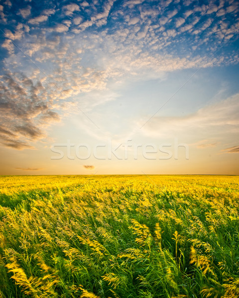 sunset above beautiful filed Stock photo © chesterf
