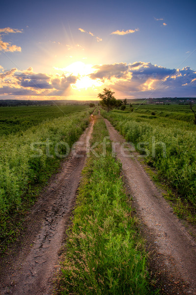 country road under sunset Stock photo © chesterf