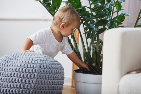 cute baby boy exploring home plants indoors Stock photo © chesterf