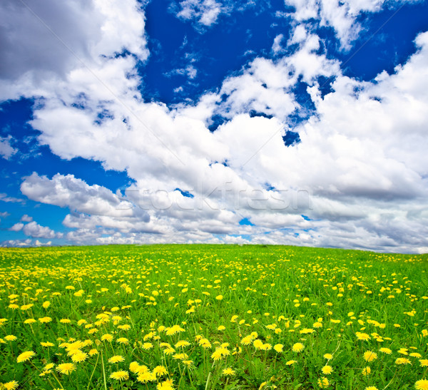 Leão azul céu nuvens primavera folha Foto stock © chesterf