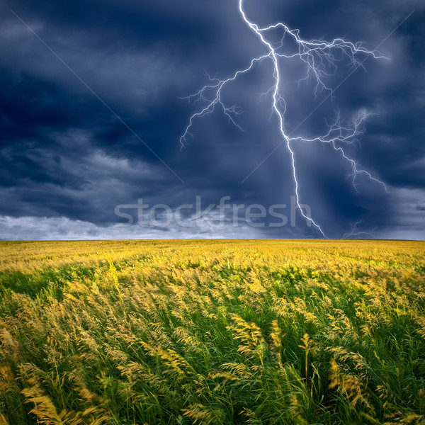 lightning flashes Stock photo © chesterf