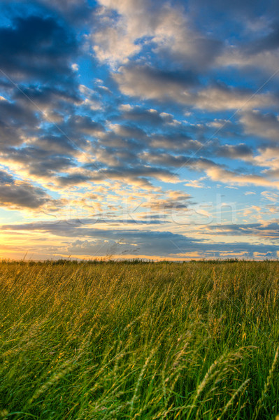 beautiful skies above the field Stock photo © chesterf