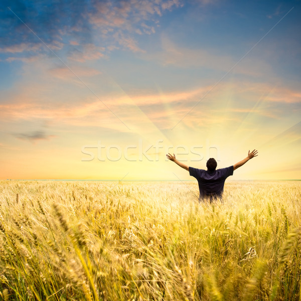 man in wheat field Stock photo © chesterf