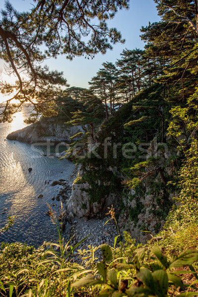 pines on a rocks at the sea in the morning light Stock photo © chesterf