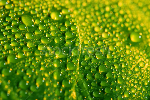 green leaf with water drops Stock photo © chesterf