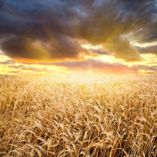 Сток-фото: закат · красивой · небе · дерево