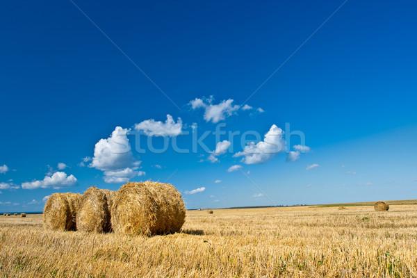 Foin bleu jaune domaine ciel alimentaire Photo stock © chesterf