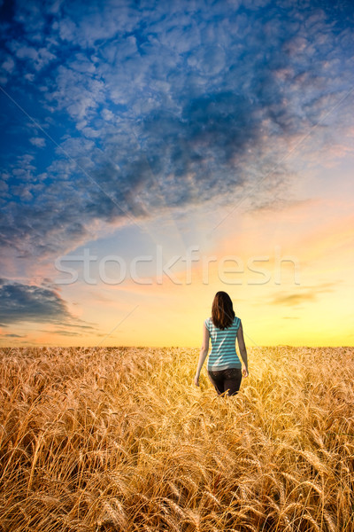 woman in wheat field walking to sunset Stock photo © chesterf