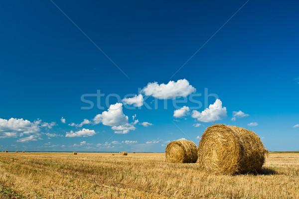 Fieno autunno campo blu cielo alimentare Foto d'archivio © chesterf