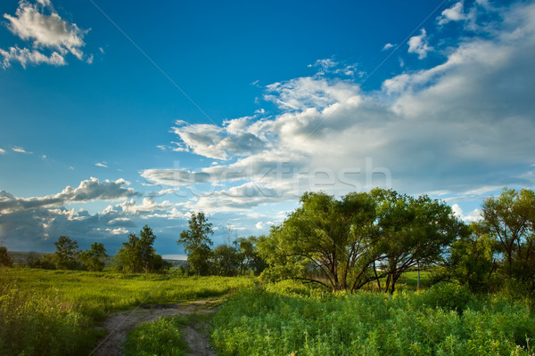 evening summer landscape Stock photo © chesterf